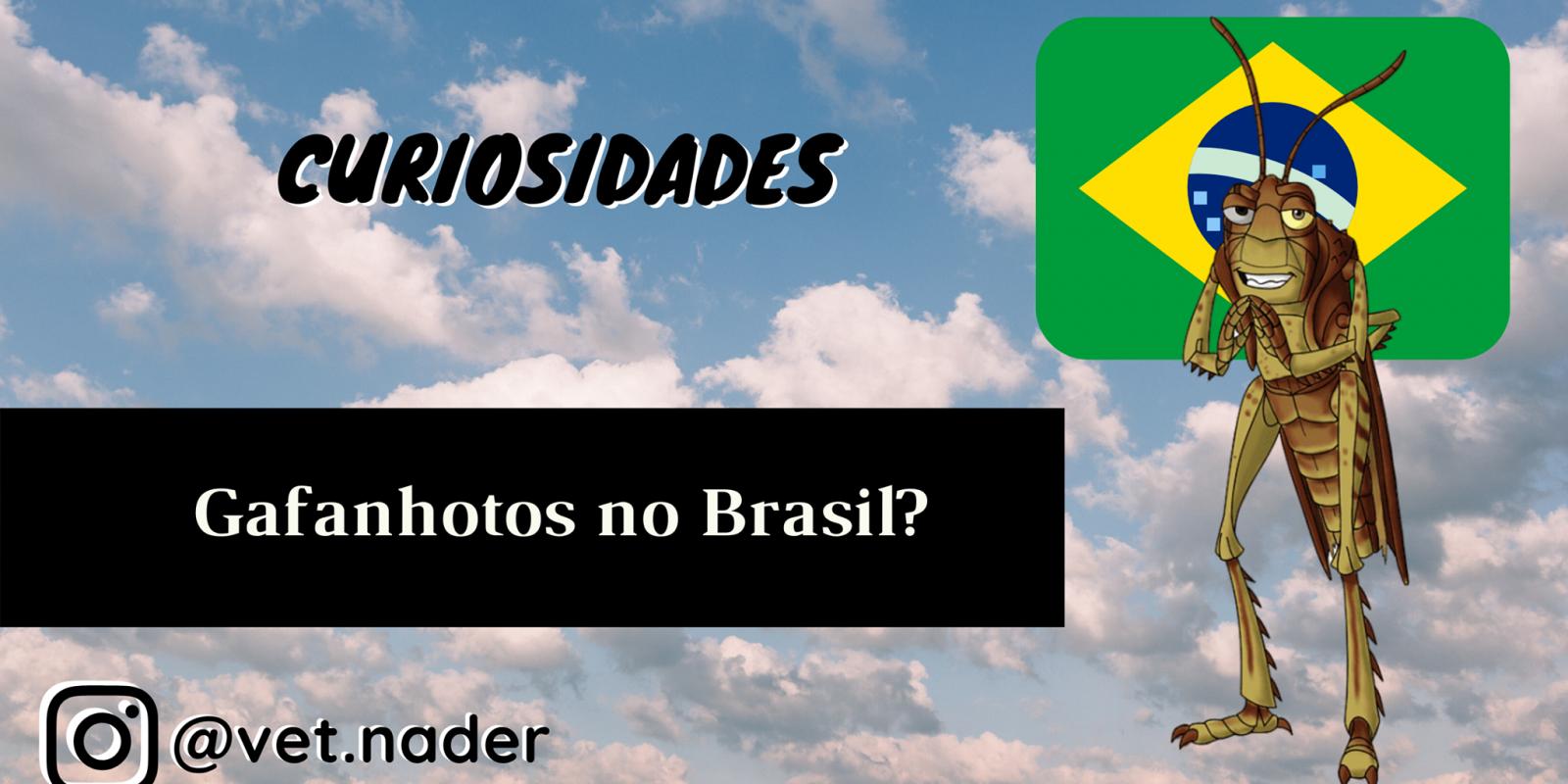 Gafanhotos no Brasil