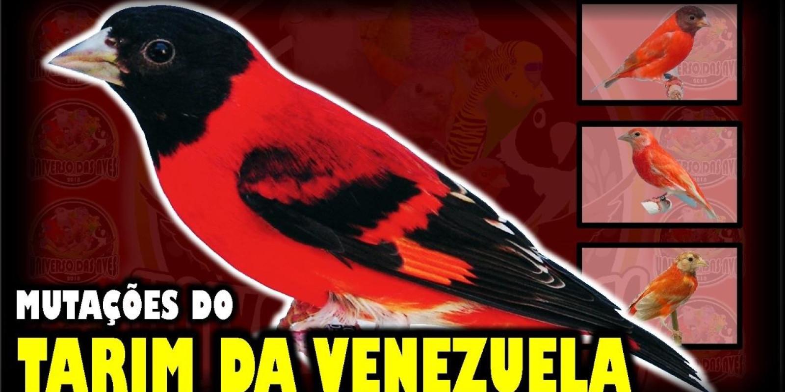 Tarim da Venezuela e Suas Mutações
