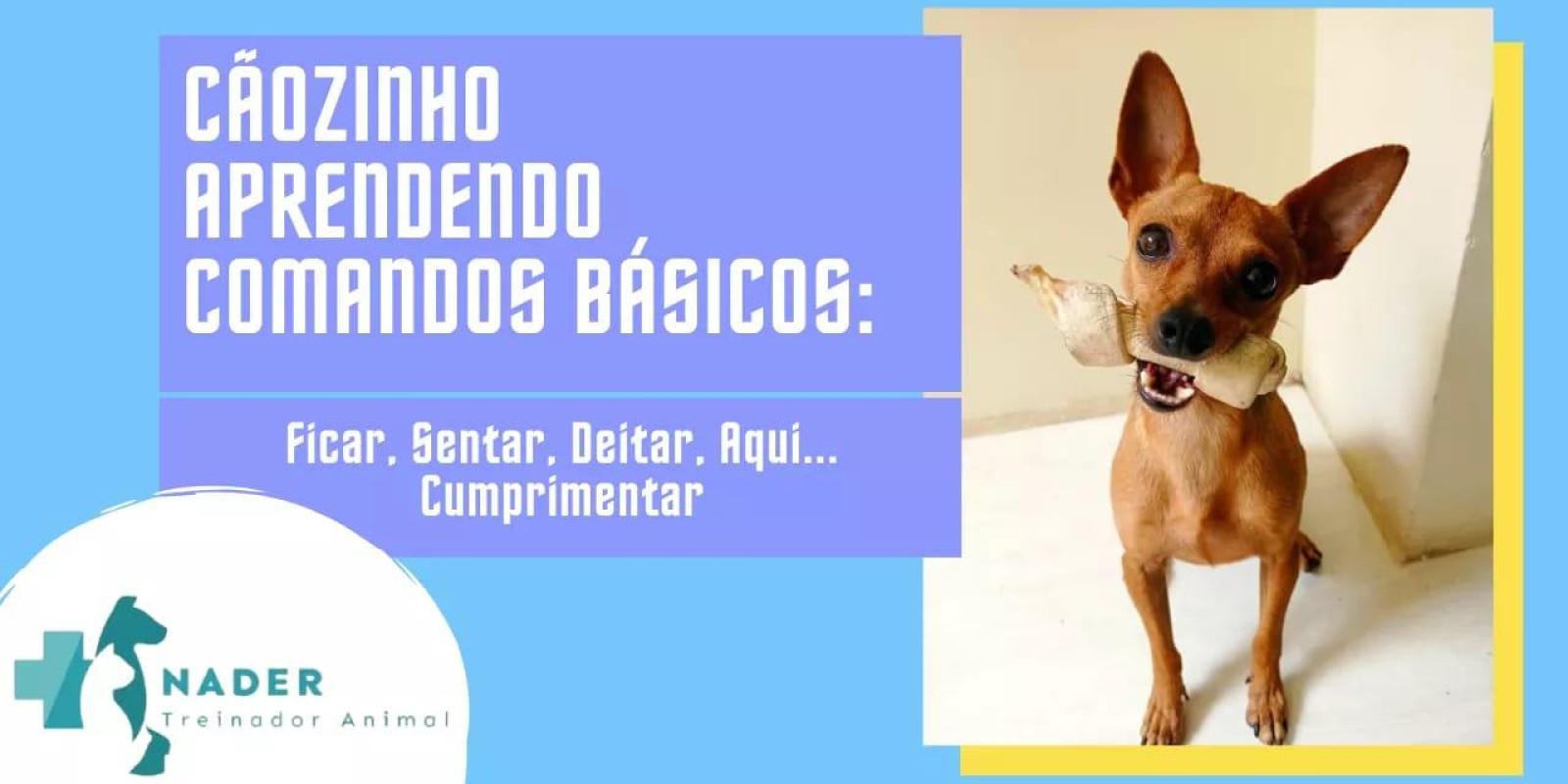 Cãozinho aprendendo comandos básicos