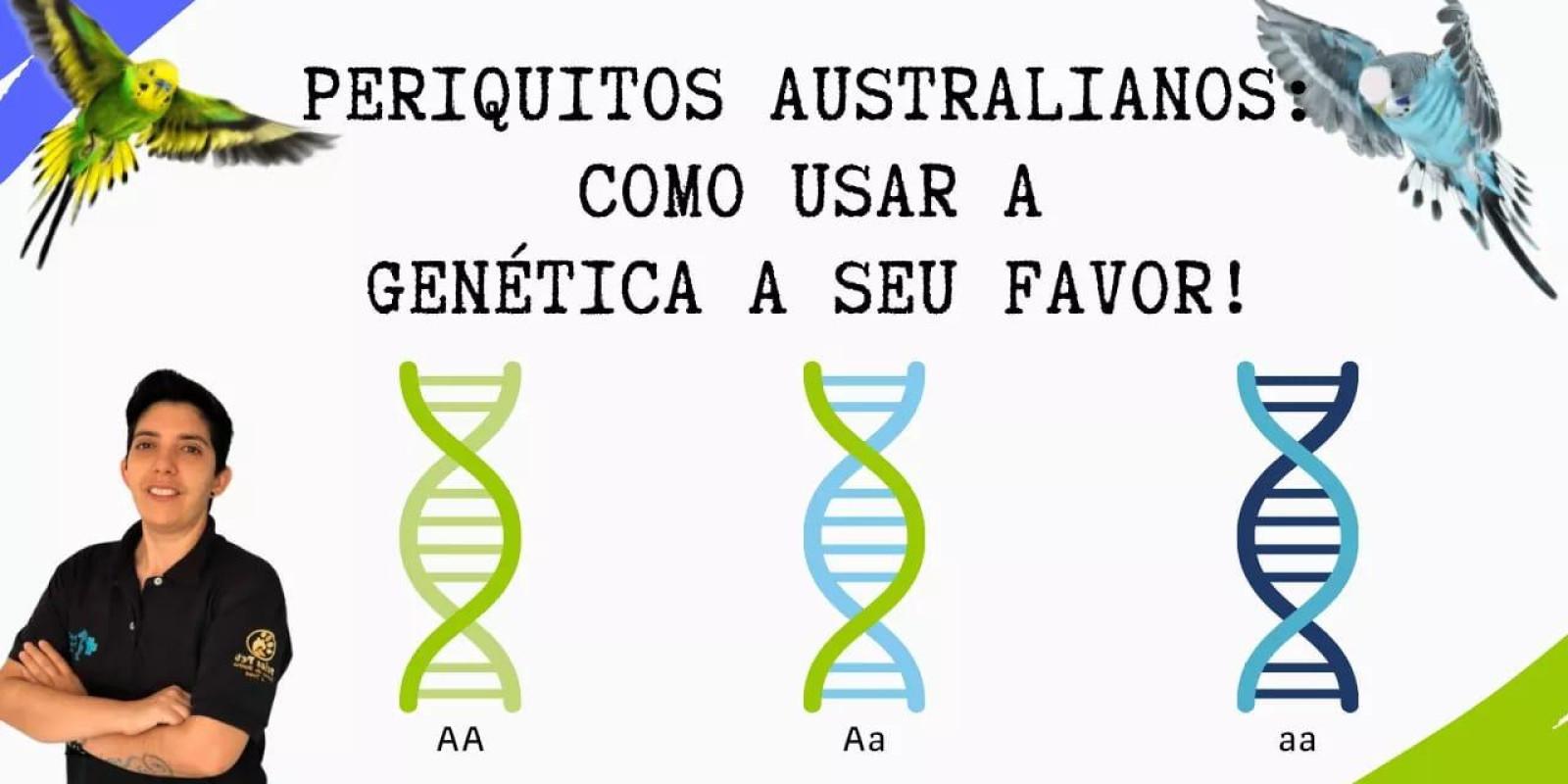 Como funciona a genética da linha verde e azul nos periquitos australianos?